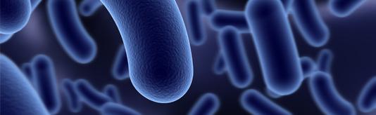 Soluciones biológicas - Bacterias Depuradoras